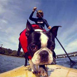 dog-life-jacket-best-options
