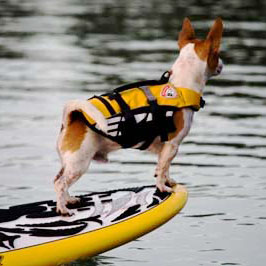 ezydog-best-life-jacket-for-dogs