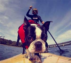 Best Dog Life Jacket for Puppies and Small Dogs