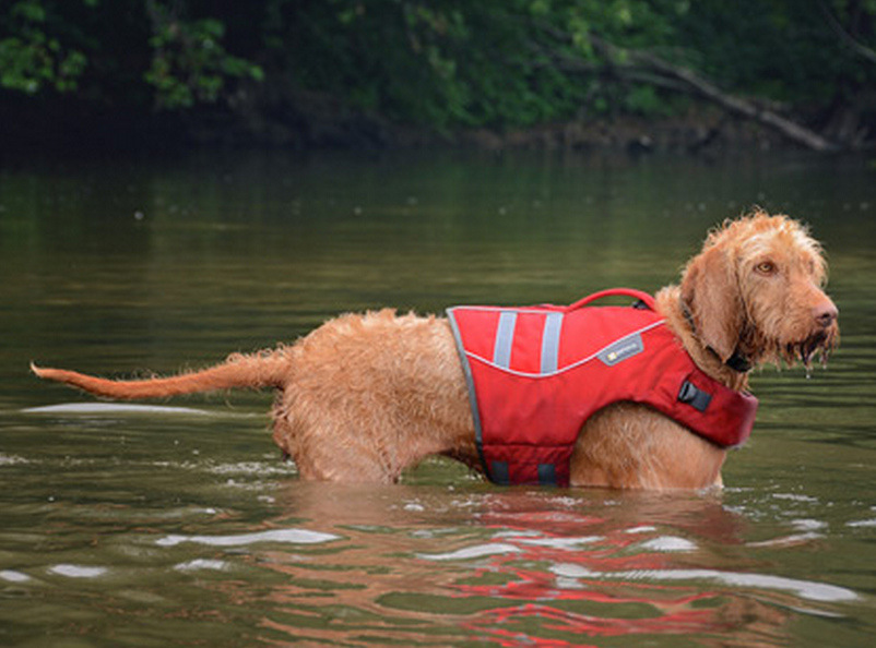 dog-life-jacket-photo