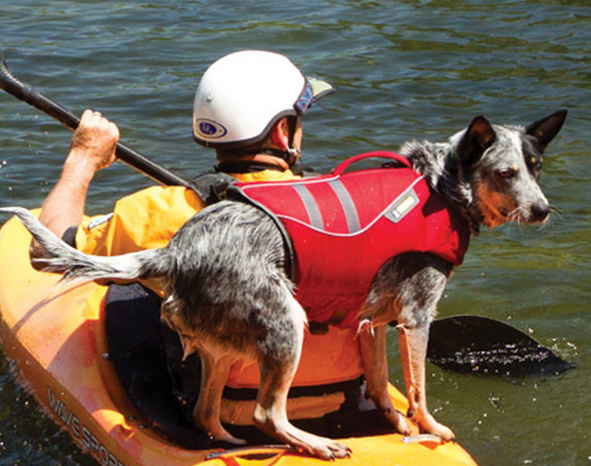 IS IT SAFE FOR DOGS TO SWIM IN LAKES
