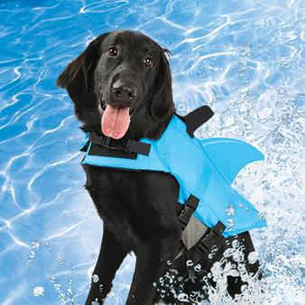 How To Teach A Dog To Swim In A Pool