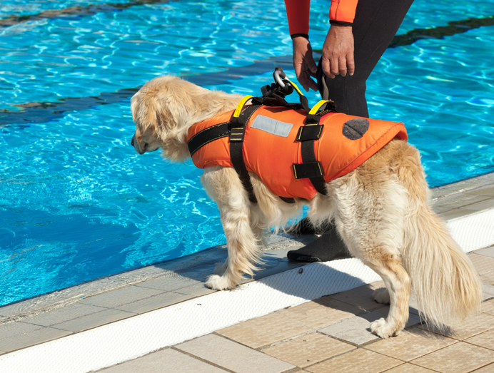 Is it ok for dogs to swim in chlorine pools
