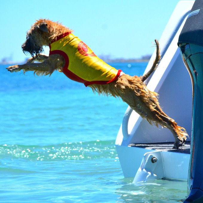 At What Age Can You Teach A Puppy To Swim?